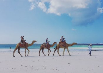 Top 10 Things to Do in Diani Beach, Kenya (with kids!)