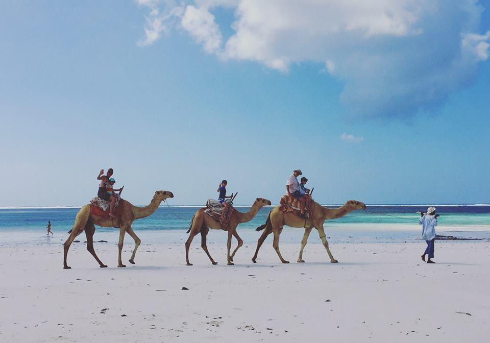 AFSB-DB-Camels