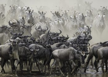 Our Family-Friendly Guide to The World's Most Impressive Wildlife Spectacle, The Annual Wildebeest Migration